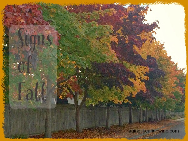 025 trees w text vertical